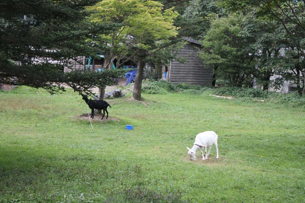 ポニーやヤギが楽しく遊んでいます