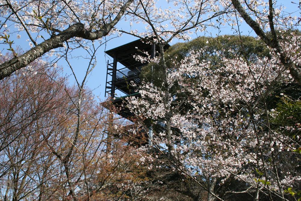 遠方から見た桜満開の愛宕山公園