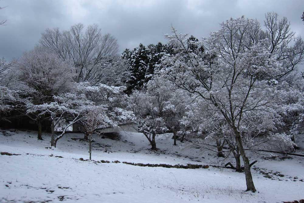 宇和運動公園 冬