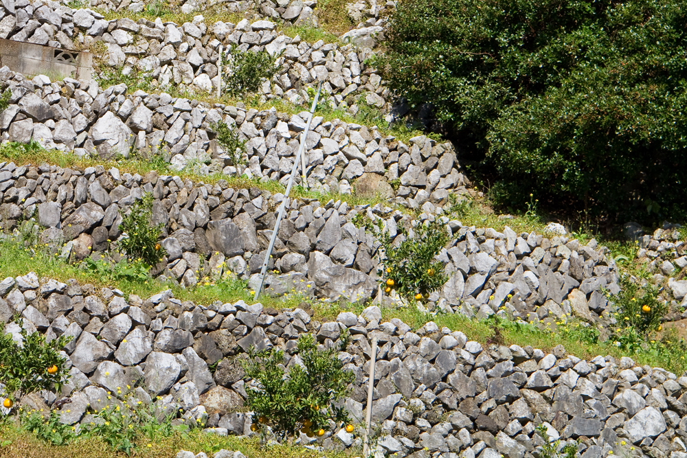 石灰岩で出来た段々畑(光りが反射して甘いみかんができます)